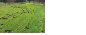 Vandalisme terrain de golf